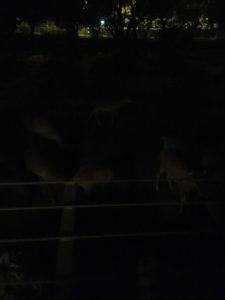 夜の動物園、そして、希少な動物との触れ合いを堪能。伊豆アニマルキングダムに行ってきました。